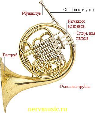 Валторна | Музыкальная энциклопедия от А до Я | Музыкальные инструменты